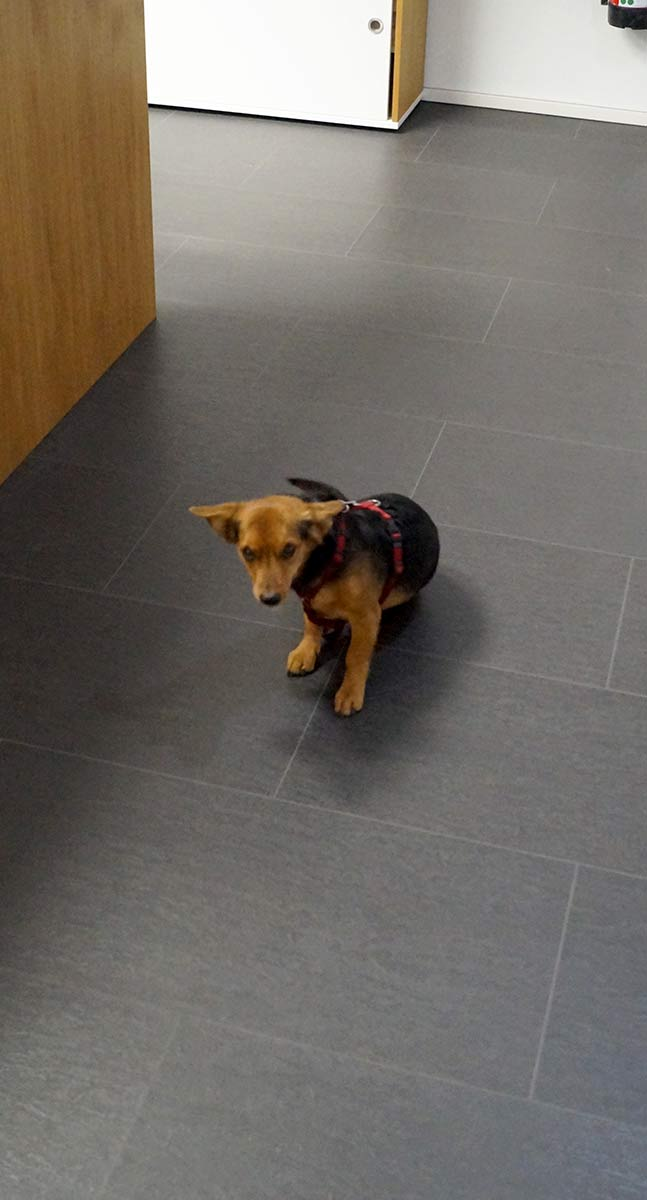 Delafair Jobs - unser Bürohund